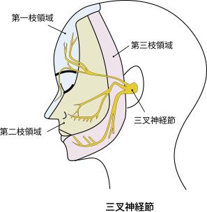 三叉神経節
