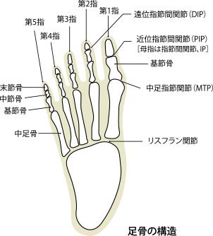 足骨の構造