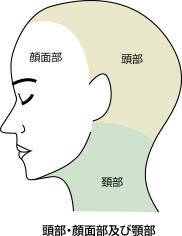 頭部・顔面部及び頸部